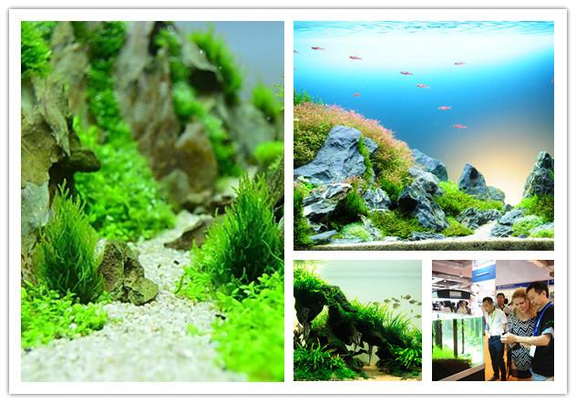 水草造景也是一门艺术,整个造景过程颇为复杂.